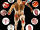 Anatomy-of-Human-Body-and-Physiology-350x350